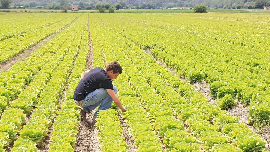 Marco Zullo M5S Europa agricoltura posti di lavoro Pac
