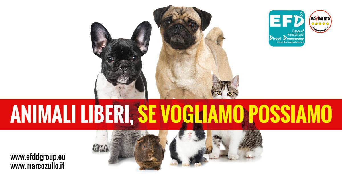 animaliLiberi1200x627_2