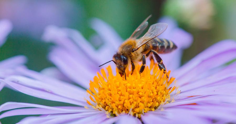 api e miele marco zullo